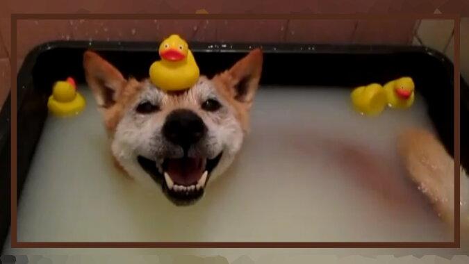 Ein Hund badet. Quelle: dogtales.com