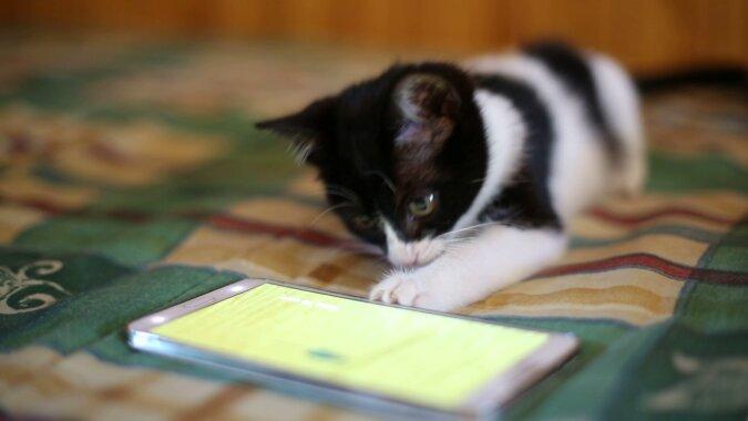"""""""Katzensprache"""": App-Entwickler behaupten, ein Programm geschaffen zu haben, das Katzen versteht"""