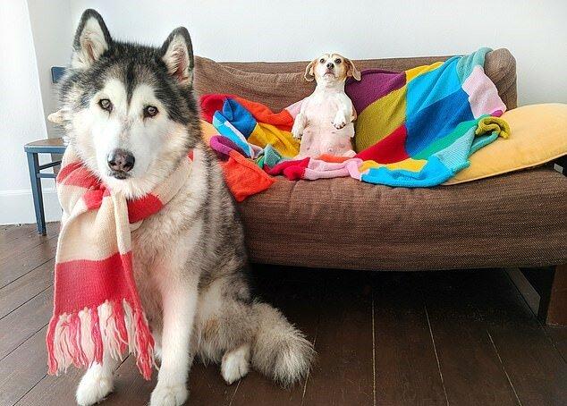 """""""Ruf mich beim Namen"""": Ein talentierter Hund lernte, den Namen seines Besitzers """"auszusprechen"""""""