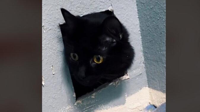 Eine Katze in der Wand. Quelle: lenta.com