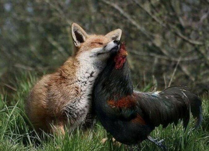 """""""Wie Pech und Schwefel"""": eine ungewöhnliche Freundschaft im Tierreich"""