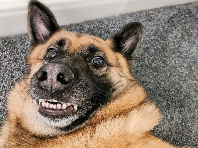 Der Moment ist festgehalten: die lustigsten Aufnahmen von Hunden, die von ihren Besitzern fotografiert wurden