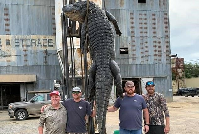 """""""Sumpfriese"""": Fischer fingen einen 4-Meter-Alligator"""