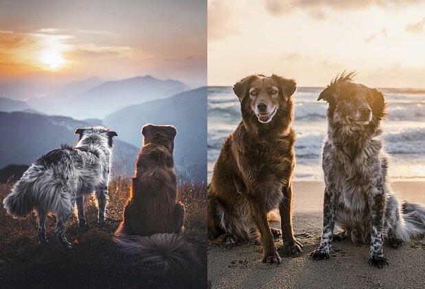 Reisende Hunde. Quelle:dailymail.co.uk