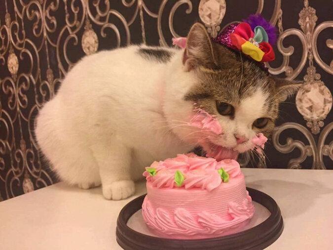 """""""Nette Nascherin"""": Eine hungrige Katze nahm einem Cafébesucher seinen Muffin mit Blaubeeren weg"""
