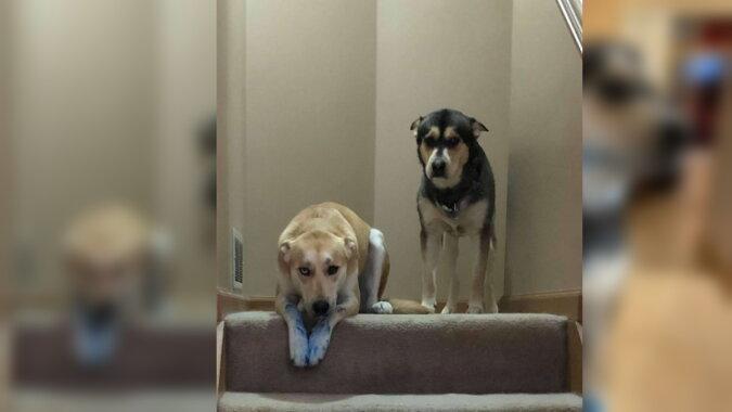 Zwei Hunde. Quelle: life.com