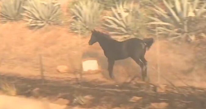 Ein tapferer Retter: Ein Pferd rettet eine Stute mit ihrem Fohlen vor dem dicksten Rauch