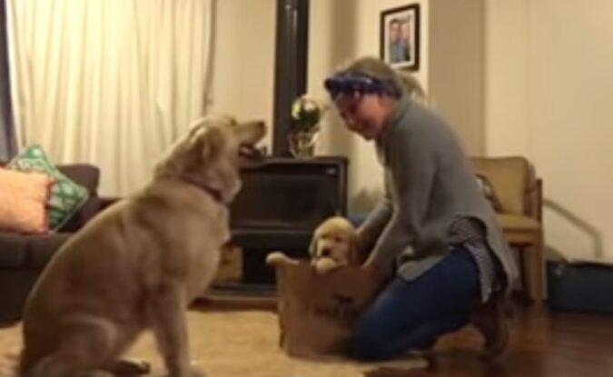 Der Hund konnte sein Glück nicht fassen, als er einen neuen Freund bekam