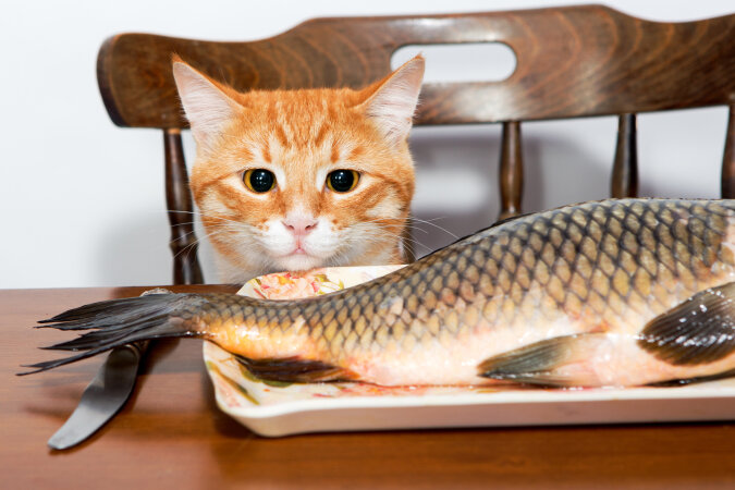 """""""Zu realistisch"""": Das Kätzchen hat versucht, den Fisch zu fressen, aber es stellte sich heraus, dass er gemalt war"""