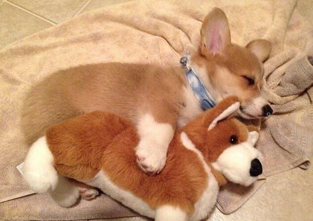 """""""Liebe für immer"""": Haustiere, die ihre Spielzeuge süß liebgewannen"""