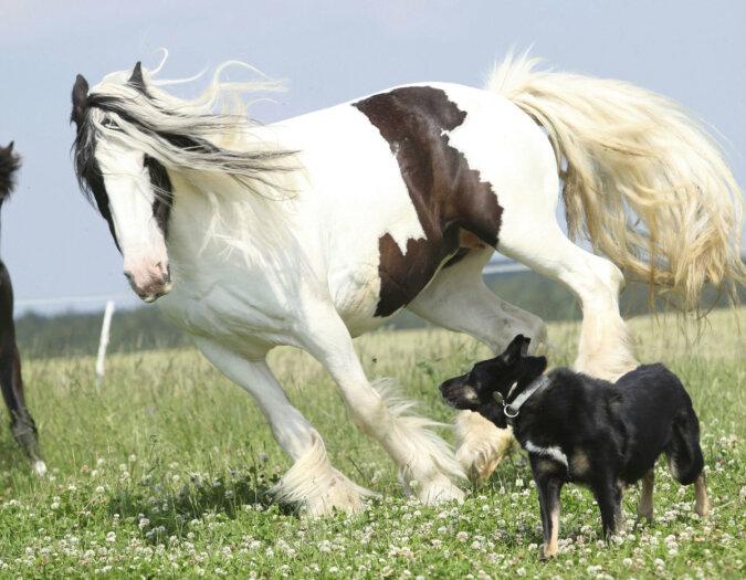 """""""Stadtspaziergang"""": kleiner Hund geht gerne mit seinem Freund Pony spazieren"""