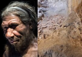 Der Neandertaler. Quelle: dailymail.co.uk