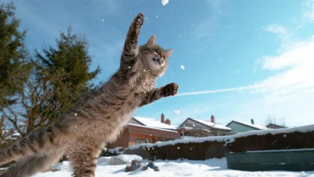 """""""Der beste Torhüter der Welt"""": Die Katze hat gelernt, Schneebälle im Fluge abzustoßen"""