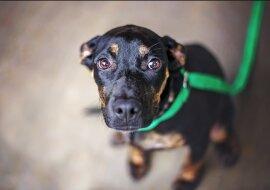 Kinder fanden einen schwarzen Fleck, der sich als Hund entpuppte: Freiwillige verwandelten ihn in ein schönes Haustier