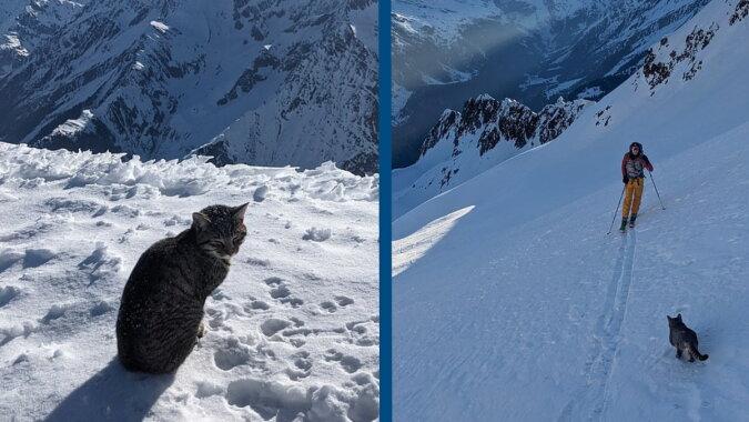 Die Katze in den Bergen. Quelle: newschant