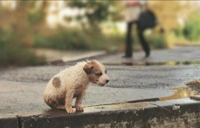 Die Frau hoffte nicht mehr, den auf dem Feld ausgesetzten Hund zu fangen und weinte verzweifelt