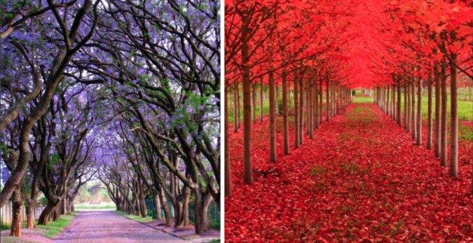 Fabelhafte Natur: Die schönen Bäume, die mehrere Jahrhunderte alt sind
