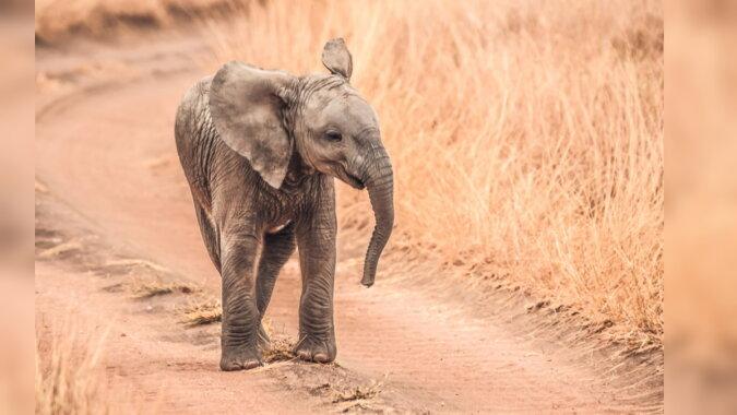 Ein Elefantenbaby. Quelle: pinterest