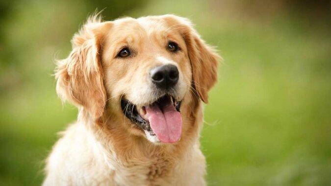 """""""Nicht erkannt"""": Der Hund bellte den Feind lange an, bis er merkte, wer vor ihm war"""