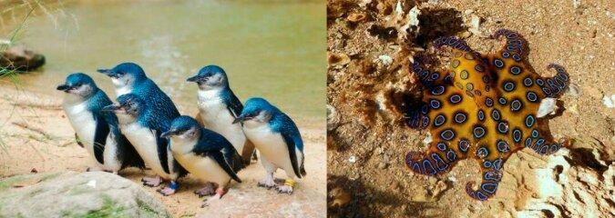 Tiere. Quelle: boredpanda.com