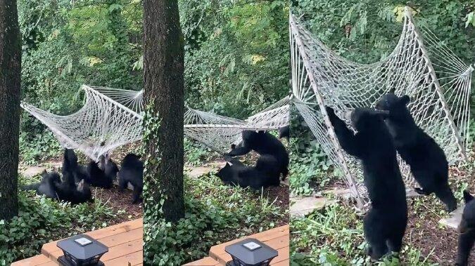 Die entzückende Bärenjungs. Quelle:dailymail.co.uk