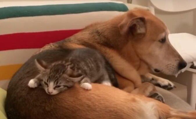 Hund und Katze. Quelle: Screenshot YouTube