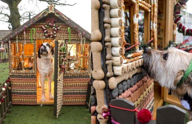 Hundehütte. Quelle:swns.com