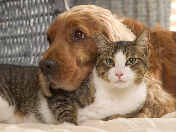 """""""Essen ist wichtiger"""": Der Hund liebt seinen Katzenfreund, vergisst ihn aber, wenn man über die Mahlzeit spricht"""