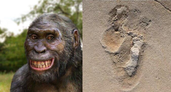 Australopithecus afarensis. Quelle:dailymail.co.uk