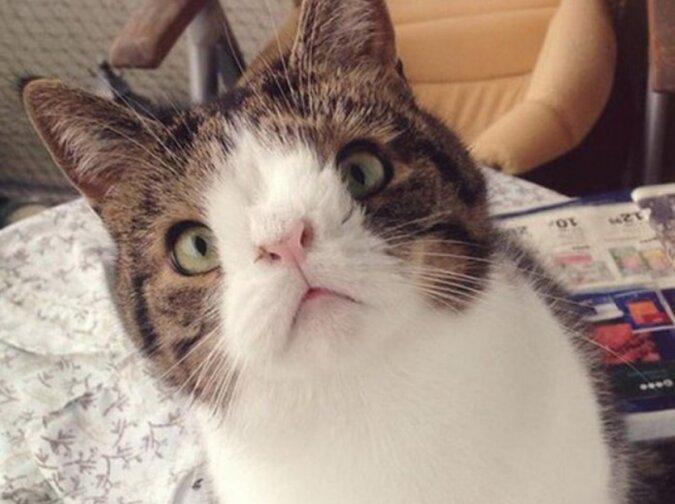 Die Geschichte einer Katze aus einem Tierheim, die dank der Liebe und Fürsorge ihrer Besitzer gerettet wurde