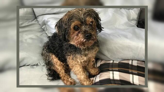 Der gefundene Hund namens Sergeant Pepper. Quelle: esquire