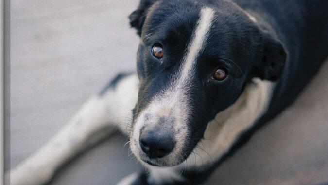 Ein Hund. Quelle: intererra.com