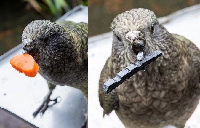 Ein Papagei. Quelle:dailymail.co.uk