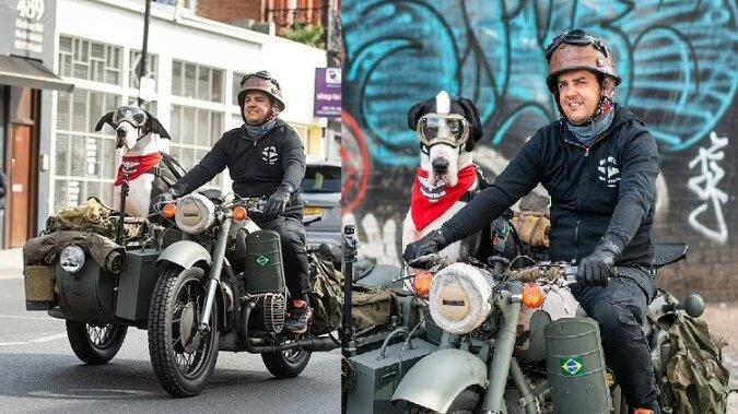 Eine Deutsche Dogge Diego. Quelle:dailymail.co.uk