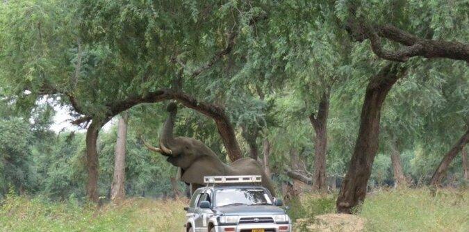 Der Elefant kam selbst zu Menschen. Quelle: goodhouse