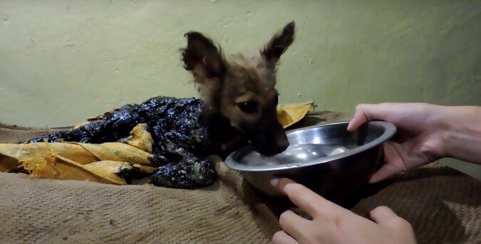 Der Welpe badete im Teer, aber Freiwilligen konnten ihn retten