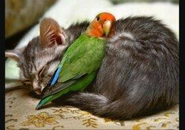 In Freud und Leid: Die rührende Freundschaft der Tiere, die entgegen den Gesetzen der Natur existiert