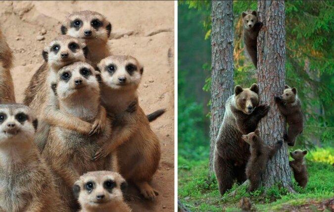 Alle sind da: Familienporträts von Tieren in freier Wildbahn