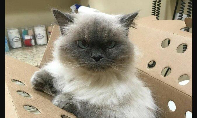 Eine schöne Katze. Quelle: zen.yandex
