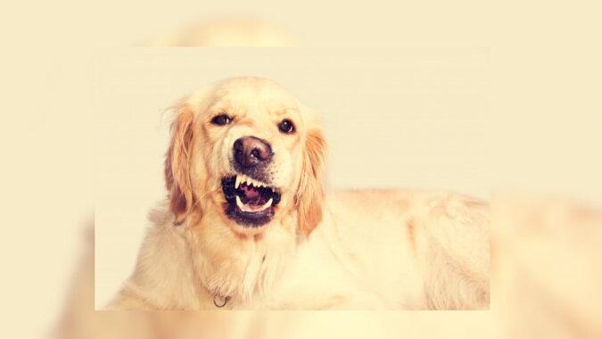 Der Hund. Quelle: pinterest