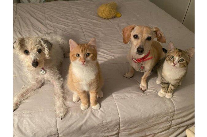 Eine Frau brachte die Katzen in eine Auffangstation zur Pflege: Ihr Hund hat aber eine andere Entscheidung getroffen