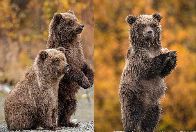 Eine Familie von Grizzlybären. Quelle:dailymail.co.uk