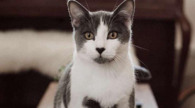 Eine schöne Katze. Quelle: pravda.com