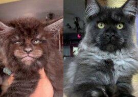 Katzen mit menschlichem Gesicht. Quelle:swns.com