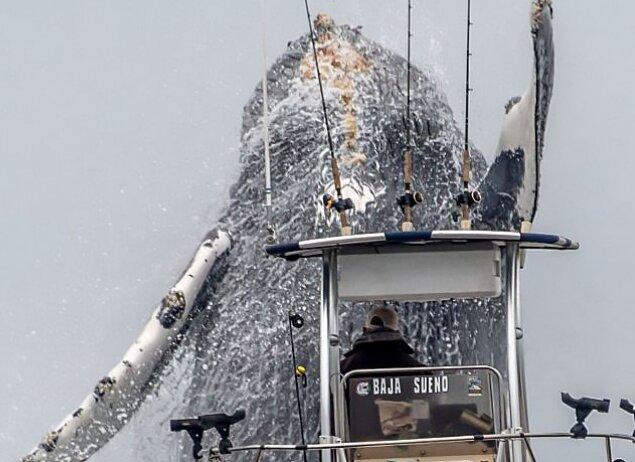 Glück war auf der Seite des Fotografen: Ein riesiger Wal tauchte  in die Höhe der Monterey Bucht