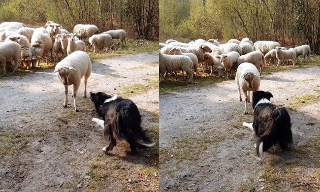 Frau mit hund sucht mann mit herz welche hunderasse