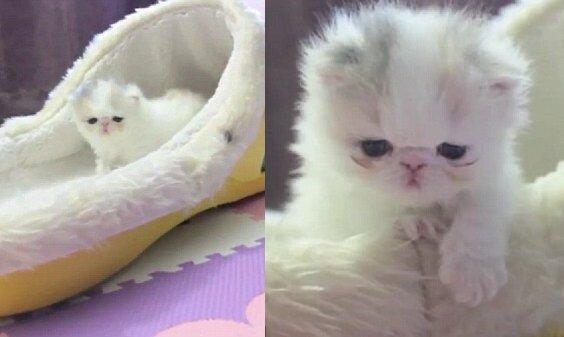 Die Katzenamens Marshmallow. Quelle:dailymail.co.uk