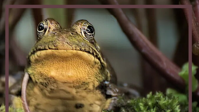 Ein Frosch. Quelle: goodhouse