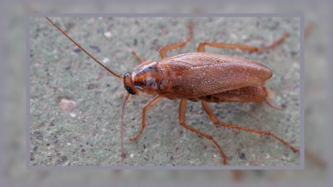 Eine Kakerlake. Quelle: pinterest
