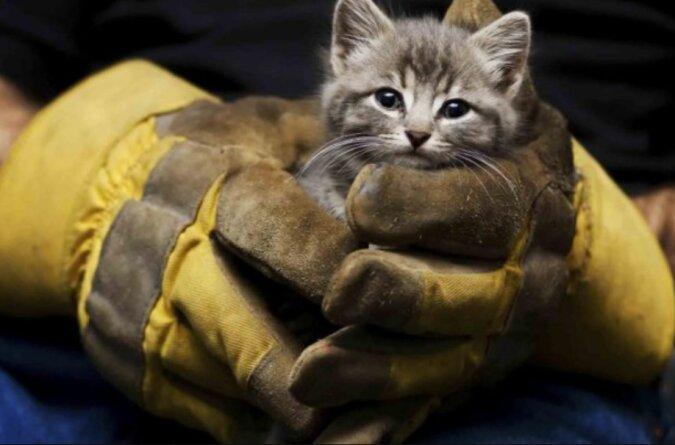 Retter zerlegten den Boden einer Wohnung komplett, um ein Kätzchen zu retten